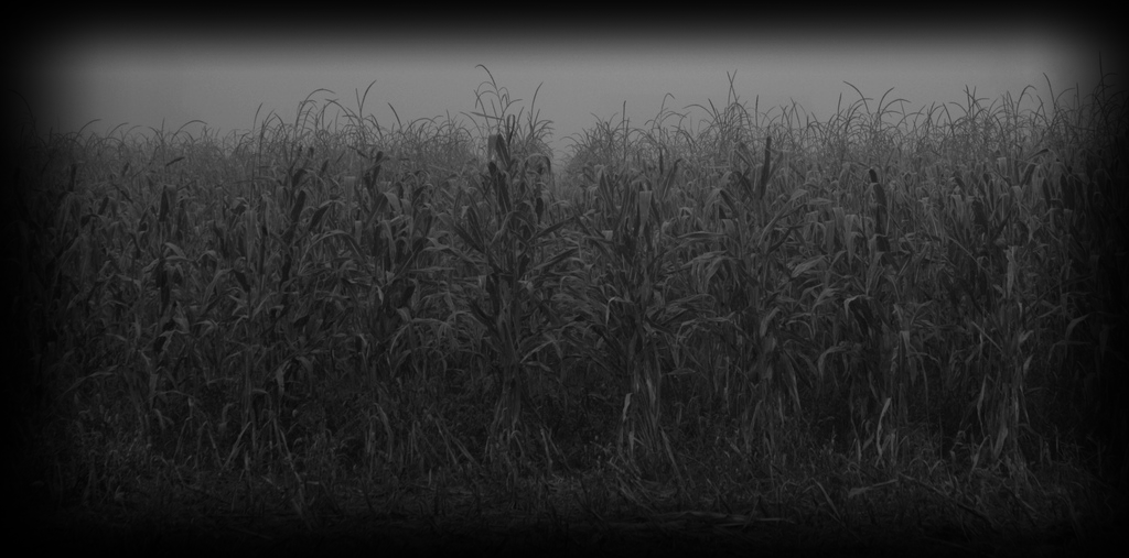 field-of-screams-ky